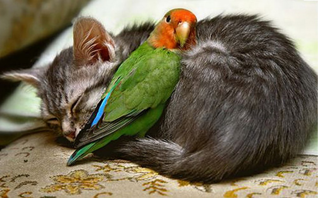 Parrot and Cat Unlikely Friends