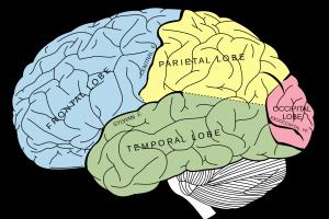Meta memory brain metalearning