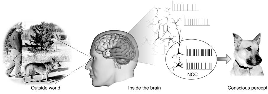 Neural_Correlates_Of_Consciousness