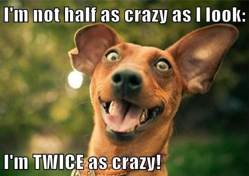laughing crazy dog happy to be imperfect