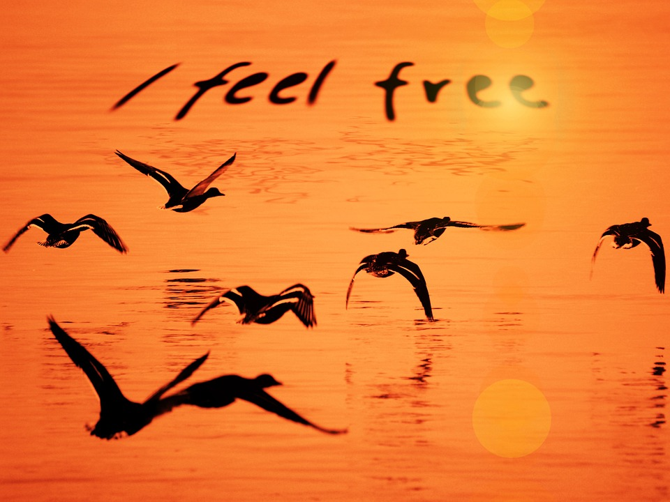 I feel free. Freedom. The startup of you. The battle for your future.